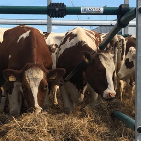 SMA Floating Farm Cow